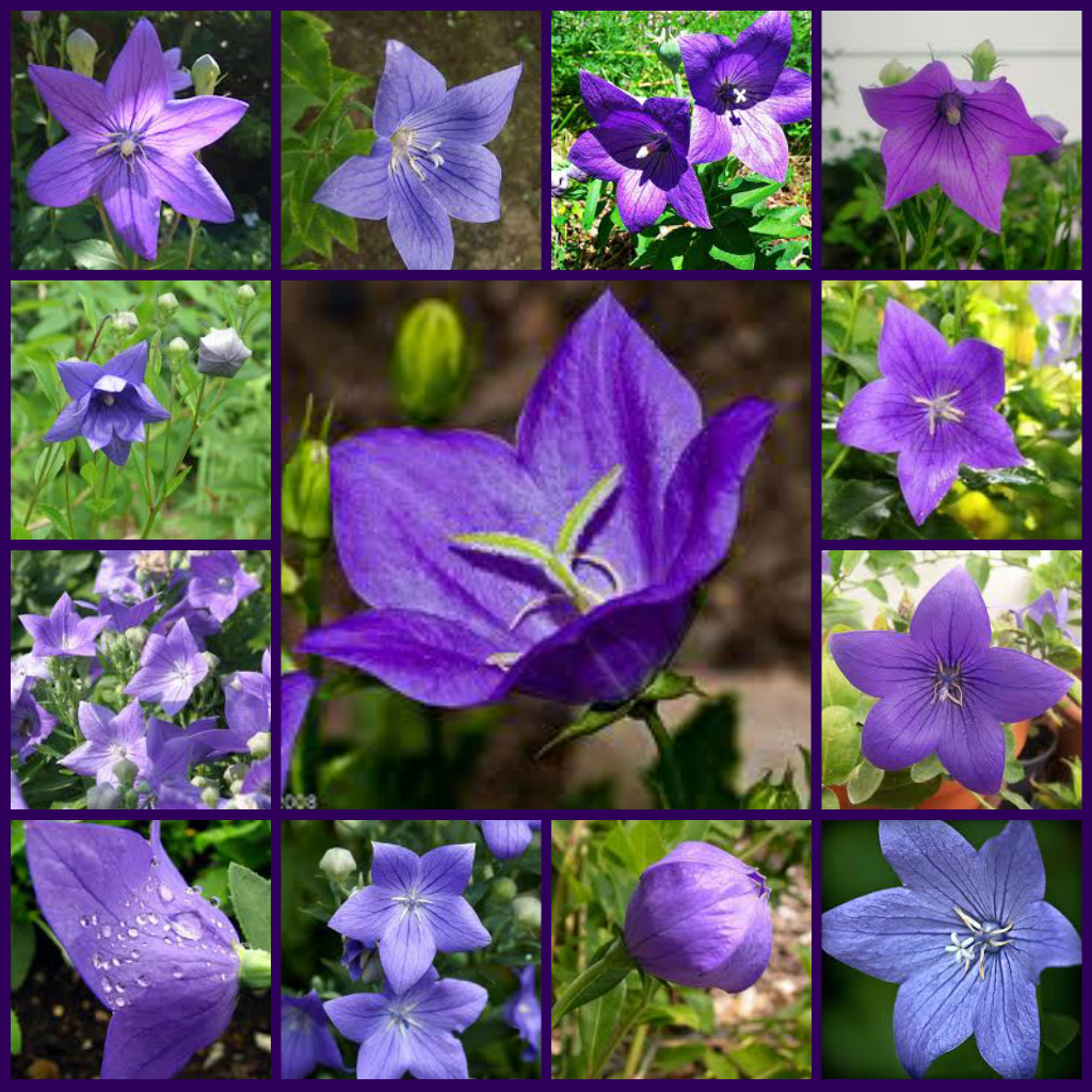 Types of Purple Flowers Purple Flowers Types of Purple
