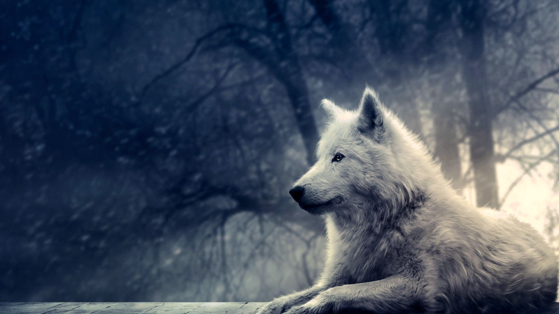 lobo wallpaper - Buscar con Google