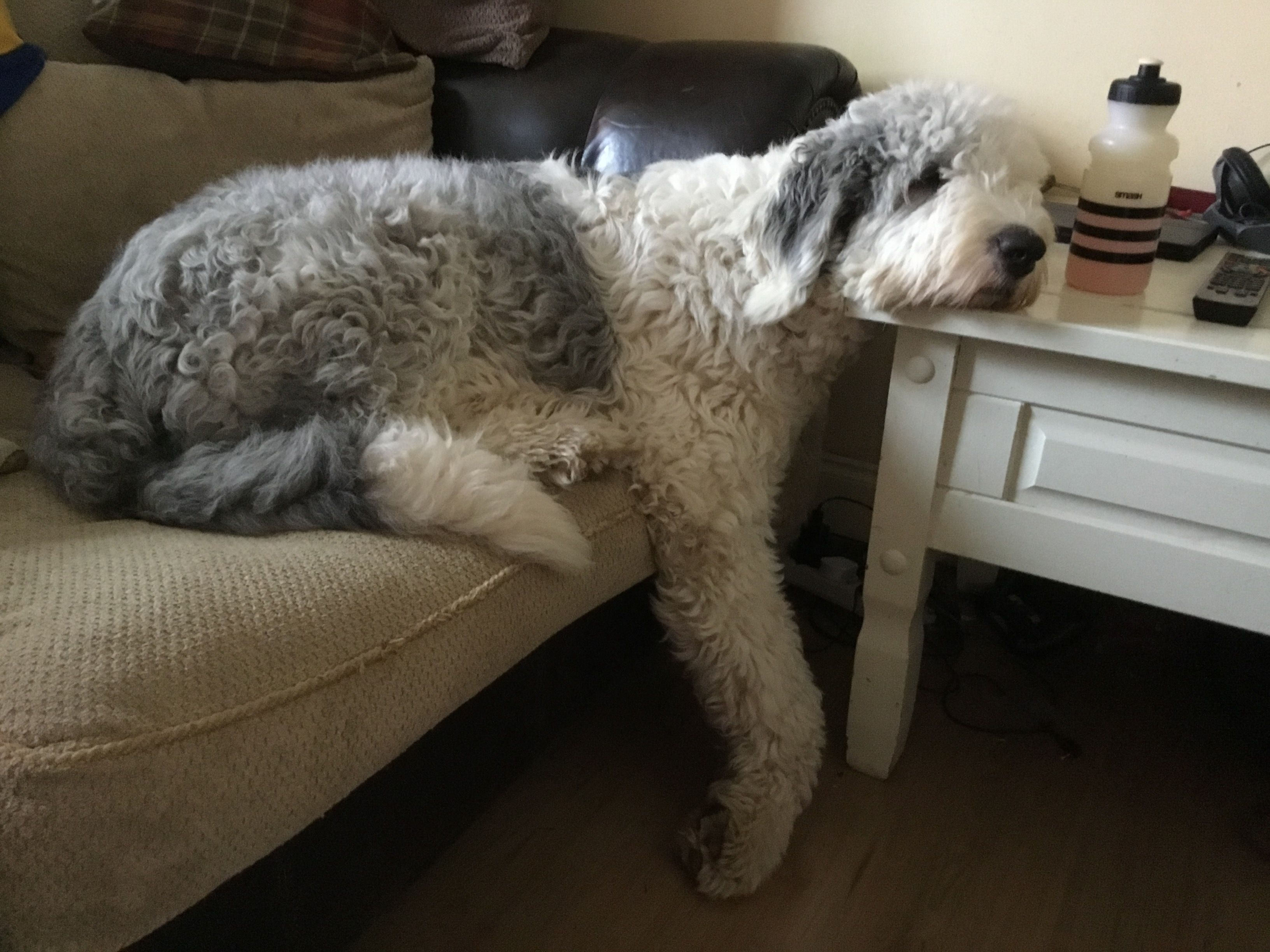 Pin By Dawn Lewis On Old English Sheepdogs With Images English