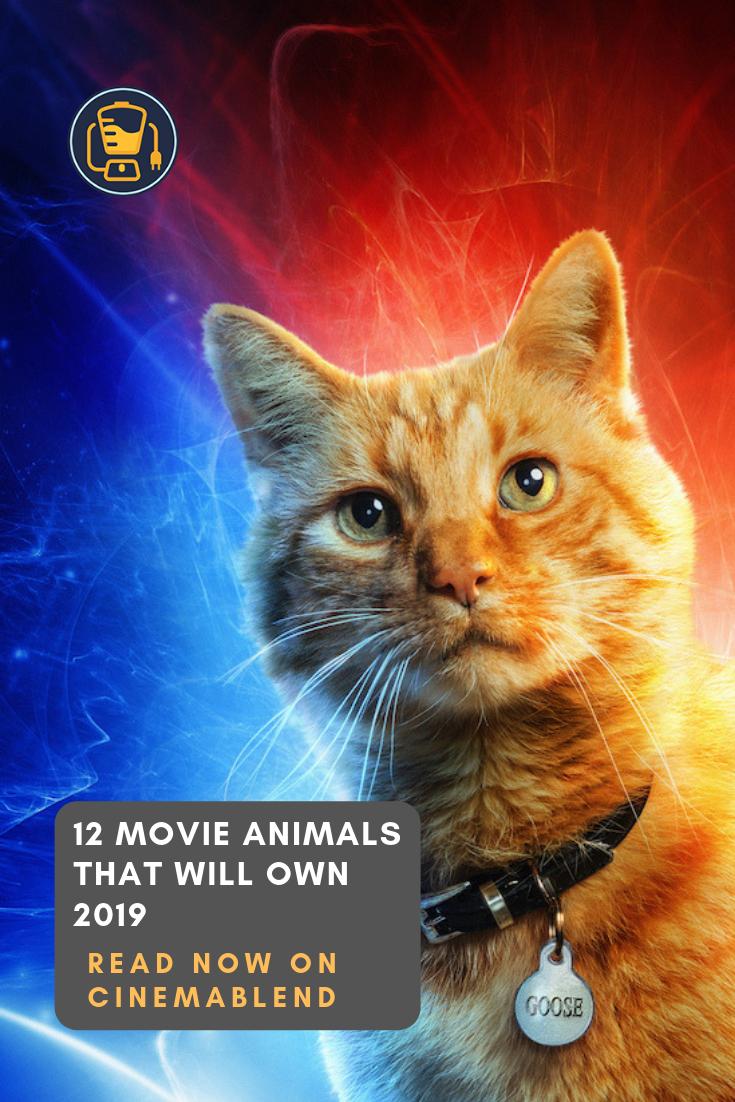 12 Movie Animals That Will Own 2019 Movies Animals Aarmau Fanart