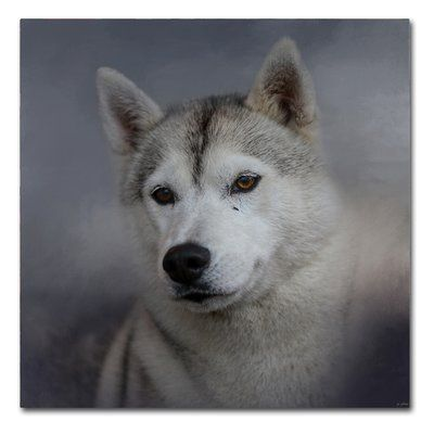 Trademark Fine Art Siberian Husky Graphic Art Print On Wrapped