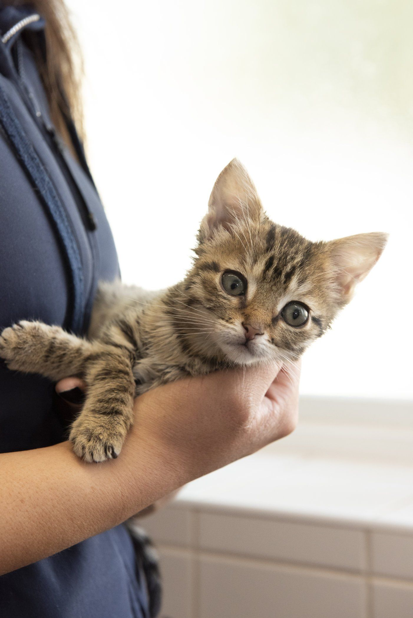 Rspca Tips For Buying A Happy And Healthy Kitten Katzenworld Cat Training Cats Dog Training Aggression