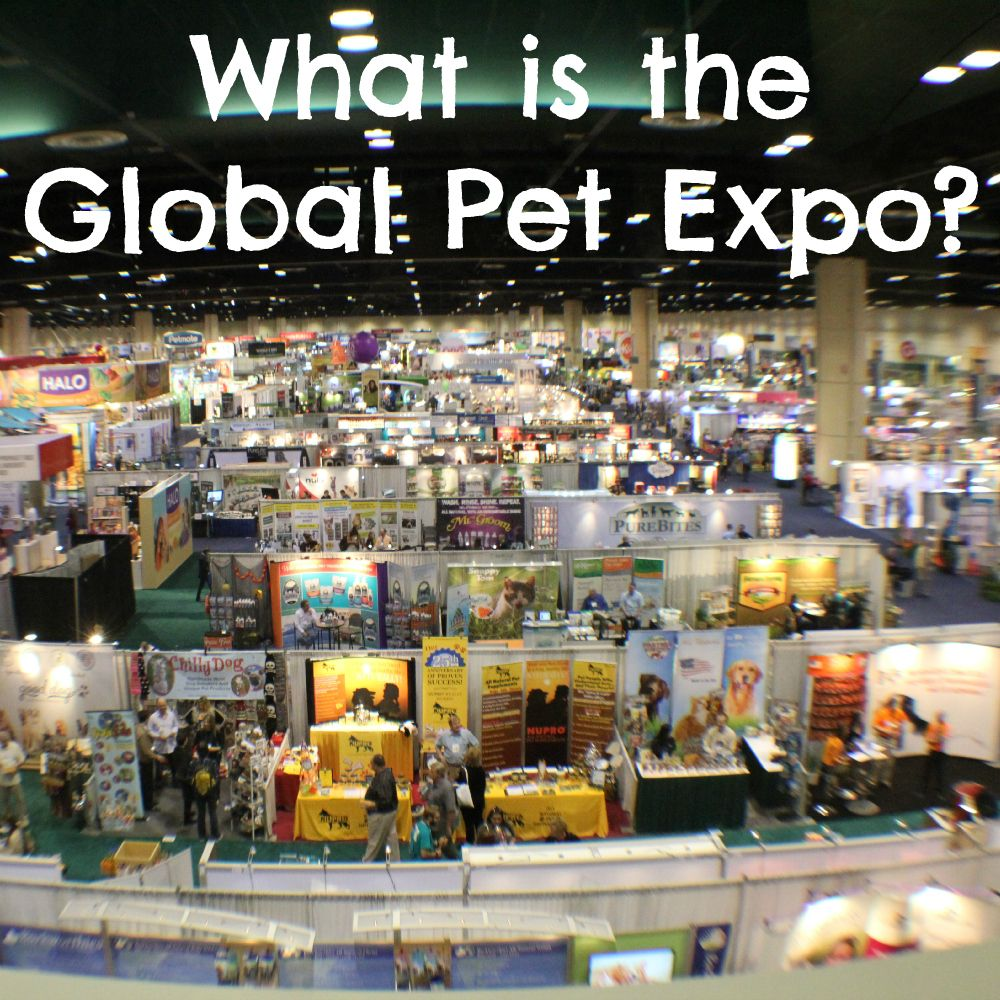 What Is The Global Pet Expo Pets Expo Cute Dog Photos