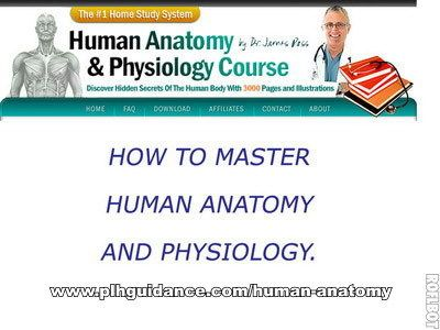How To Master Human Anatomy And Physiology | Lovely Activities ...