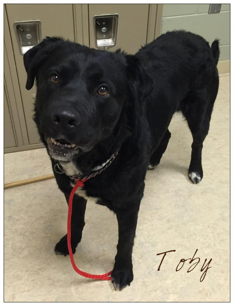 Adopt Tobyhas been ADOPTED!! on Rescue me please