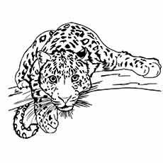 Top 25 Free Printable Leopard Coloring Pages Online Cat Coloring