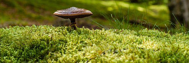7 Astuces Anti Mousse Naturel Un Plus Beau Gazon Au Jardin Bio Pelouse Jardinage Astuce Naturelle