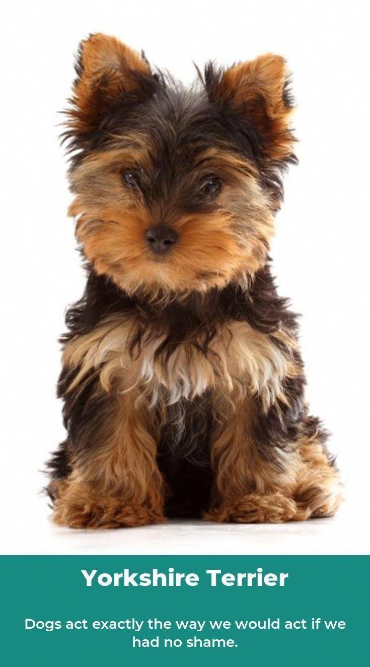 #shemakesmehappy#smilesfordays#snortmonster#atdogs#cutepetclub#ilovemybostie#Ilovemydog#bostonterrier#ruffpost#awwfeed#petsdelight#ilovemybostie#bostonterrier#bosties#wecanteven#myworld#dogchild#furchild#dspetstyle#abmhappylife#vscodog#animalsco#ruffpost#awwfeed#petsdelight #animaladdicts #nothingisordinary