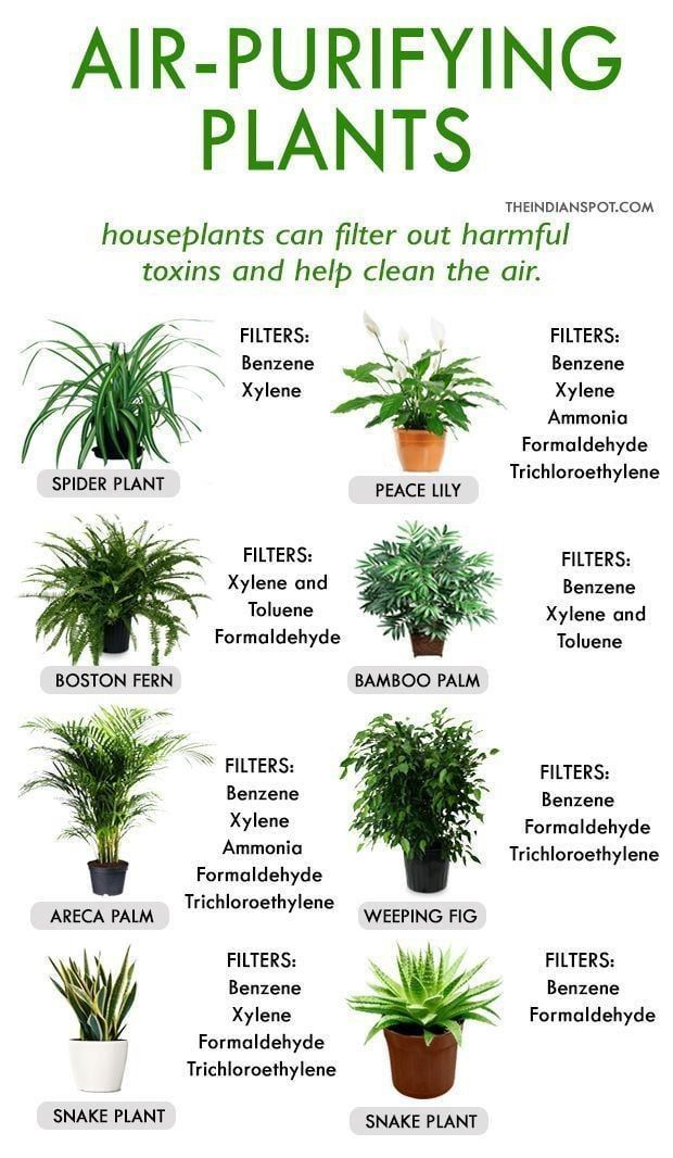 Air Purifying Plants In 2020 Plants House Plants Indoor Best Indoor Plants