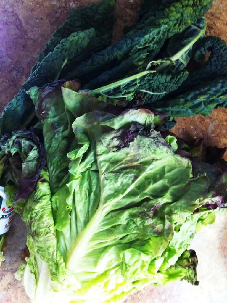 Greens Gone Bad: How to Avoid the Guilt of the Wilt - It's a love/love thing