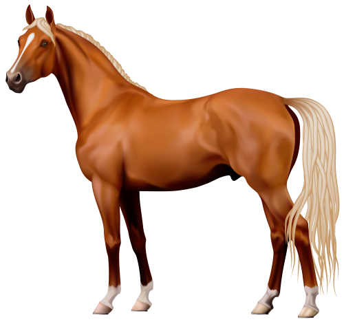 Brown Horse Png Clipart The Best Png Clipart Horses Brown Horse Free Horses