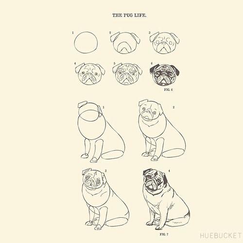 How to Draw The Pug Life {id 307} by Huebucket | HUEBUCKET | pug ...