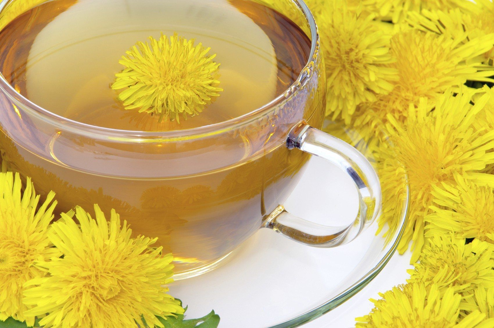 Making Dandelion Fertilizer Tea Tips On Using Dandelions As Fertilizer Dandelion Tea Benefits Dandelion Tea Dandelion Root Tea