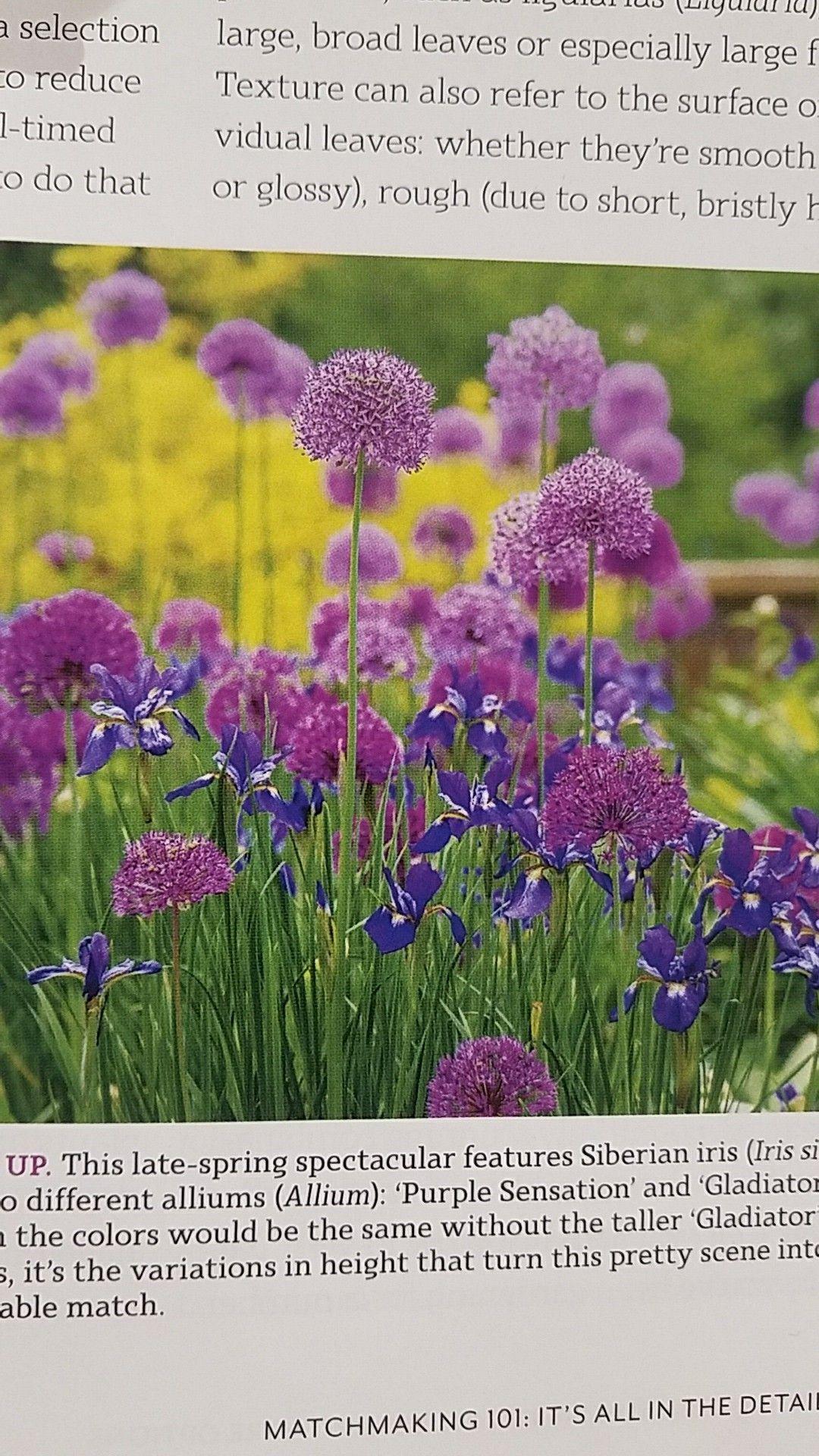 Allium companion planting idea | Companion planting ... Leek Companion Plants