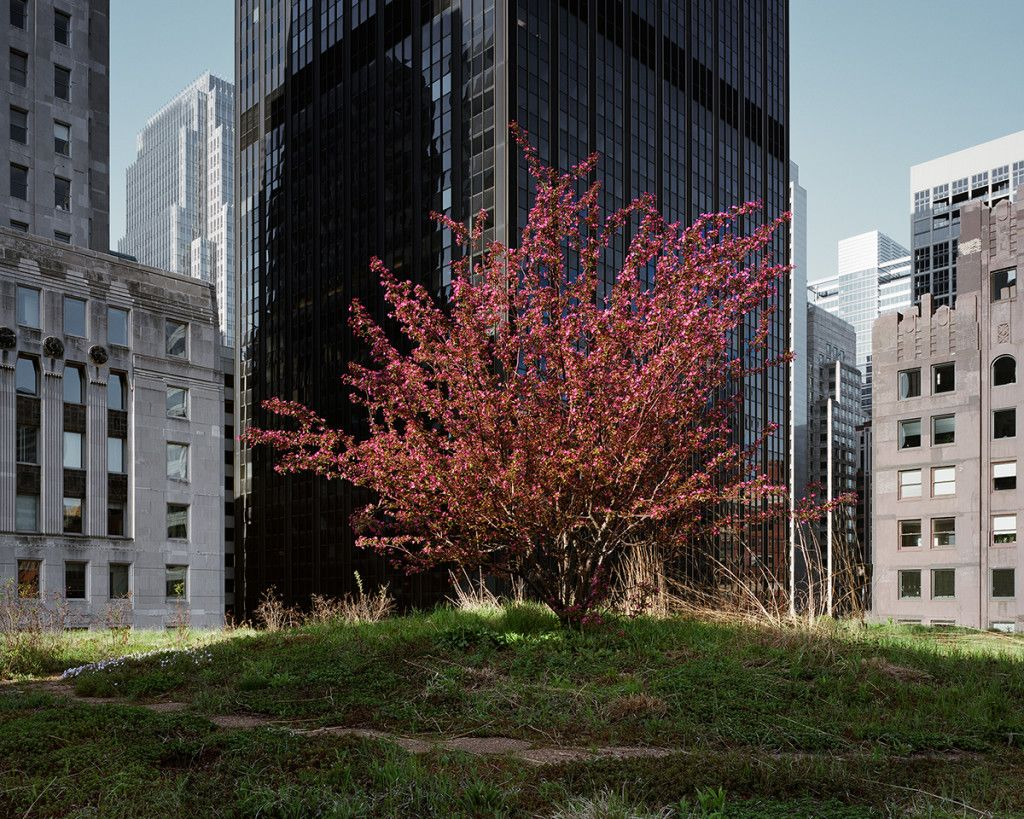 Gorgeous Photos Of The Rooftop Gardens Hiding High Above Our Heads Green Roof City Hall Nature Photographs