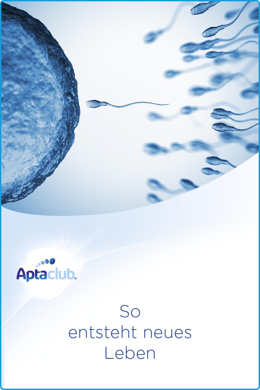 Samenzellen und Ei- Prozess von Befruchtung der Kinderwunsch, Fruchtbarkeit