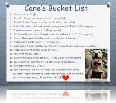 Couple has created a bucket list for their dying dog, 'Cane'