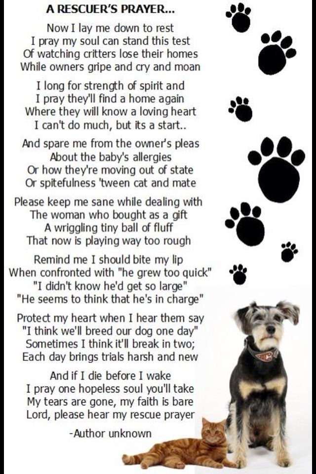 Pin By Shannon S Moore On Animal Attraction Animal Poems Homeless Dogs Dog Poems