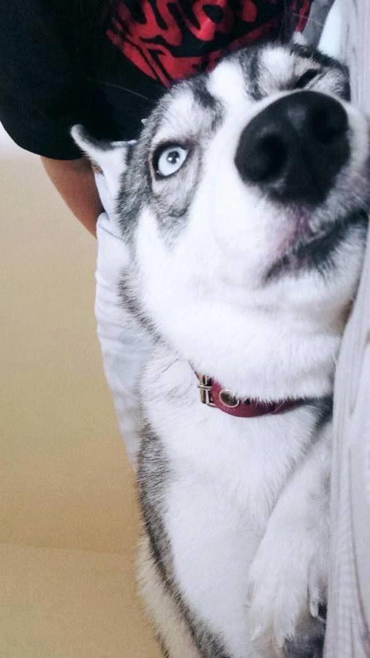 😍😍😍 #dogs #dogsofinstagram #doglovers #lovedogs #cute #cutedog #animals
