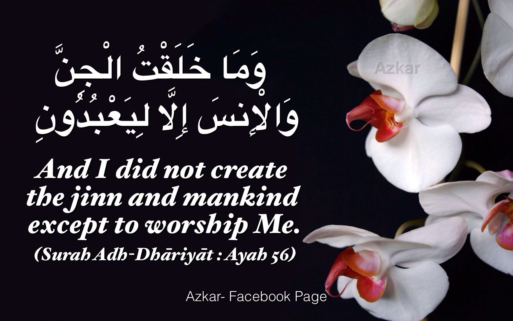 And I Did Not Create The Jinn And Mankind Except To Worship Me Quran 51 56 Noble Quran Quran The Jinn