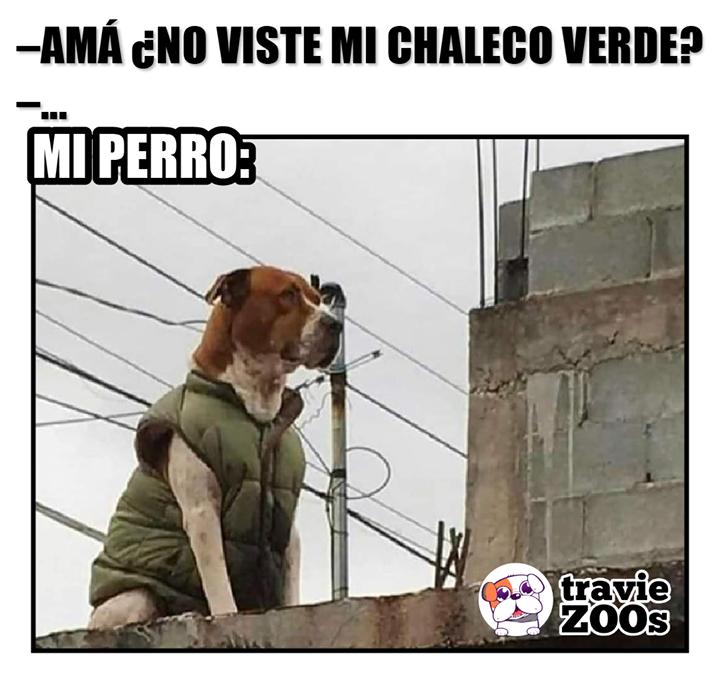 Me Da Mucha Pena Jefa Pero Tenia Frio El Milaneso Perros Memes Divertidos Fotos De Animales
