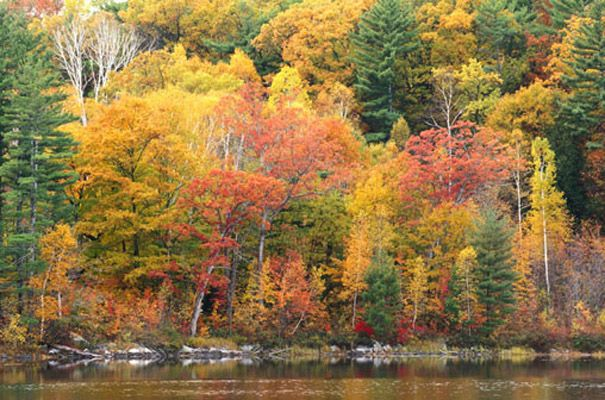 Autumn forest photo wall mural peak of the season fall for Autumn forest mural