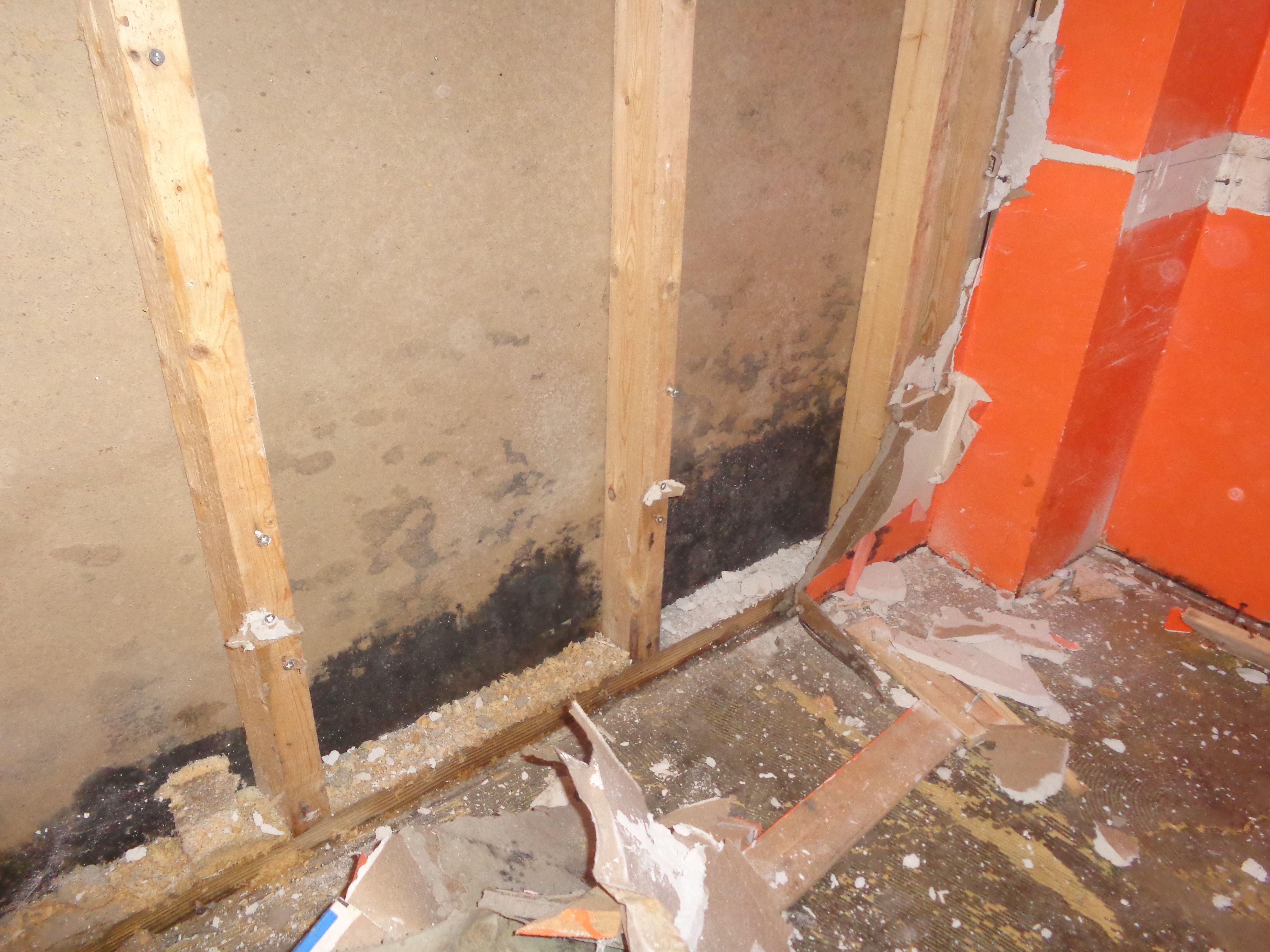 Black mold removal in bensalem pa mold in basement get