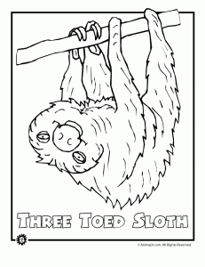 Endangered Three Toed Sloth Animal Coloring Page