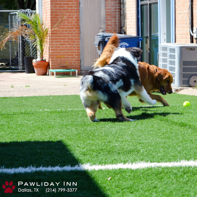 Pawliday Inn Dog Boarding Dog Training Dog Daycare Dog