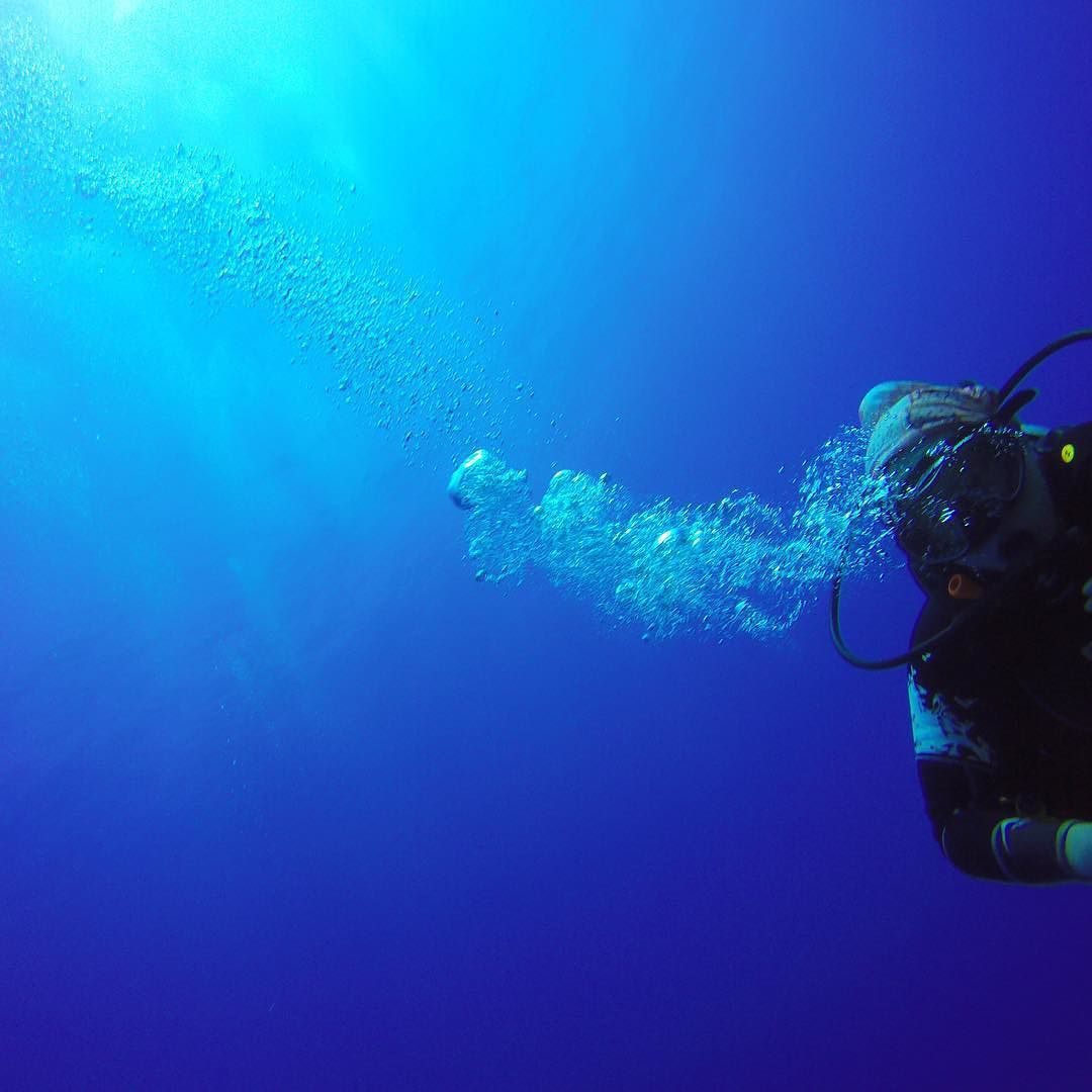 Live outside the bubble.  #scuba #workhardplayhard #diving #scubadive #scubadiver #scubagirl #coralsea #coral #savethesharks #ocean #oceanphotography #underwaterphotography #travelling #travel #travelgram #travelphotography #expat #exploreyourworld #adventure #mikeballdive #GBR #greatbarrierreef #cairns #australia #gopro #goprohero #dametraveler #queensland #neverstoexploring #travelstoke by thelawsofexploration http://ift.tt/1UokkV2