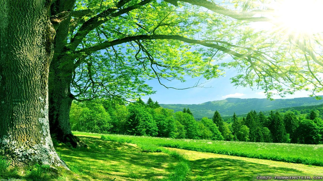 Kelly Green Forest Summer Desktop Backgrounds Landscape Wallpaper Nature Wallpaper