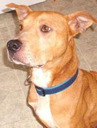 Adopt Romeo On Dog Activities Labrador Retriever Dog Retriever Dog