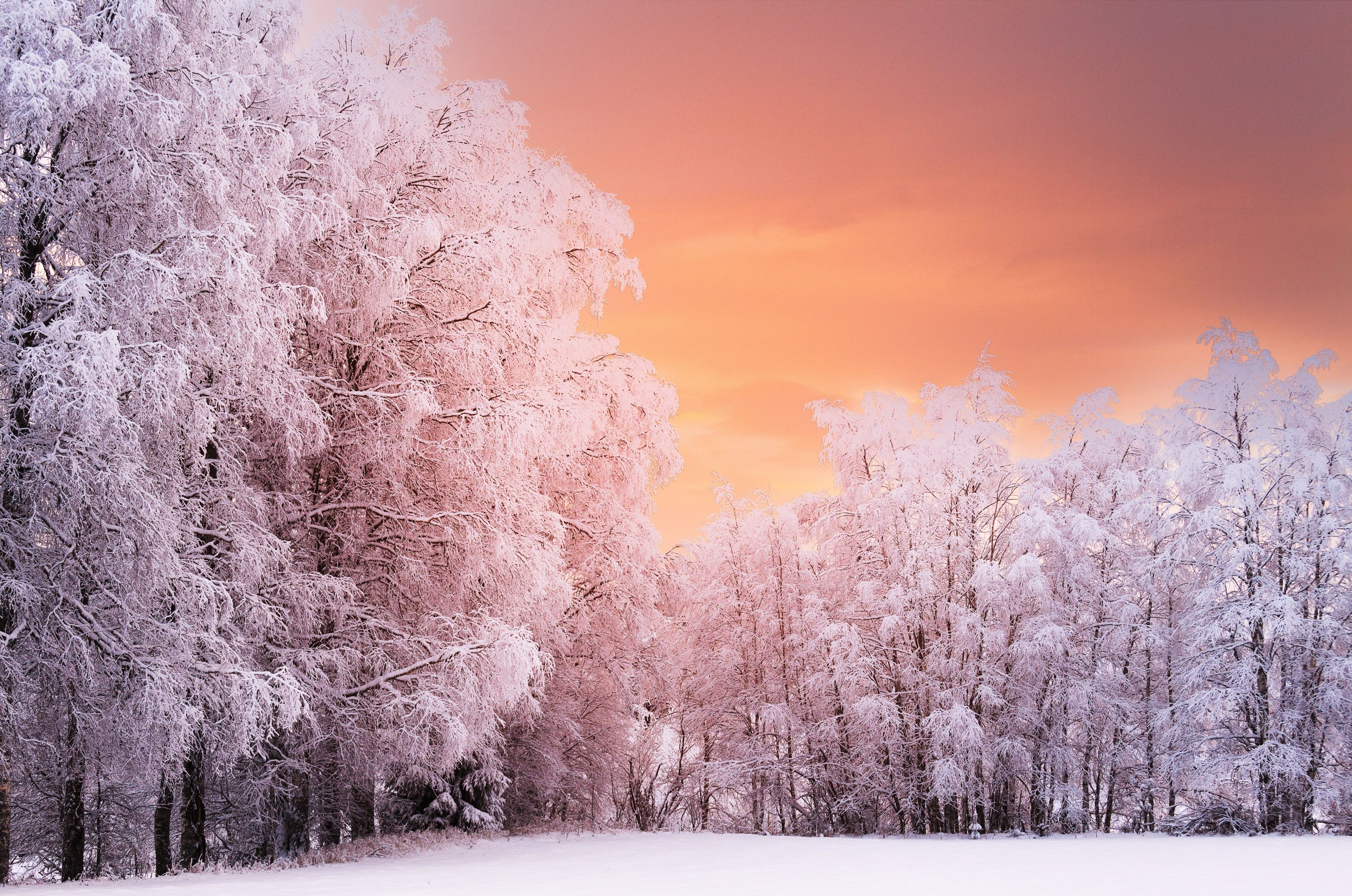 3840x2546 Winter Forest 4k Cool Wallpaper For Pc Forest Sunset Winter Forest Sunset Wallpaper