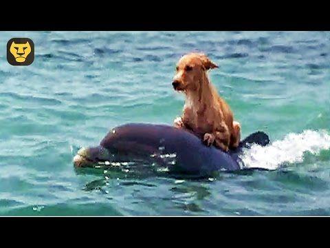 Personas Salvan Animales -Grandes Héroes Rescatando Vidas Animales - INTENTA NO LLORAR - YouTube