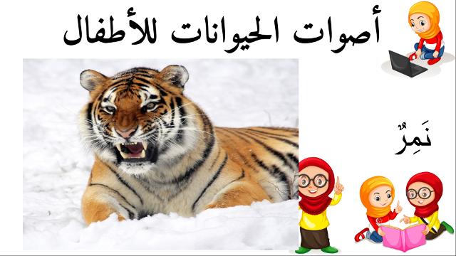 نمر أسماء الحيوانات للأطفال وأصواتها Animals Tiger