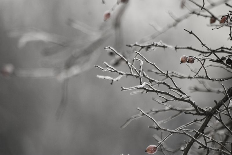 All sizes   winter   Flickr - Photo Sharing!