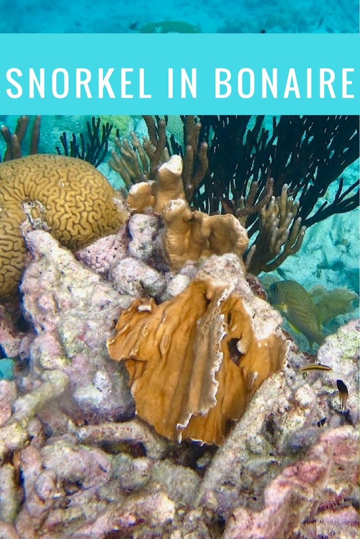 Don't Miss A Chance To Head Underwater In Bonaire (With