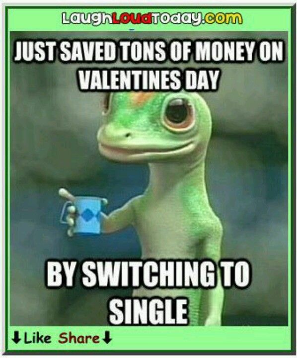 Geico Quotes Magnificent Funny Geico Gecko Saved Money On Valentines Dayswitching To .