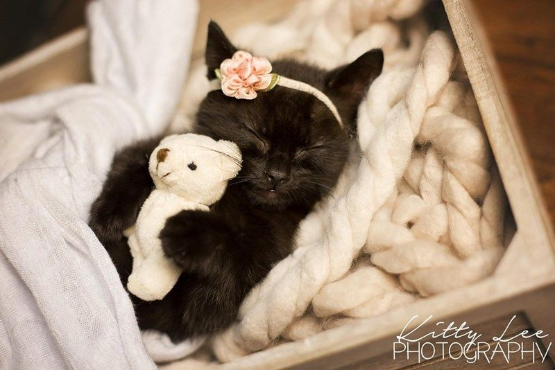 An Amazing Newborn Kitten Photo Shoot I Can Has Cheezburger Funny Cats Funny Pictures Funny Cat Memes G Newborn Kittens Kittens Cutest Kitten Photos