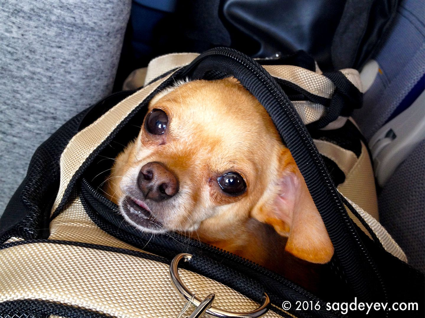 A Cute Dog My Neighbour On The Way To Tokyo