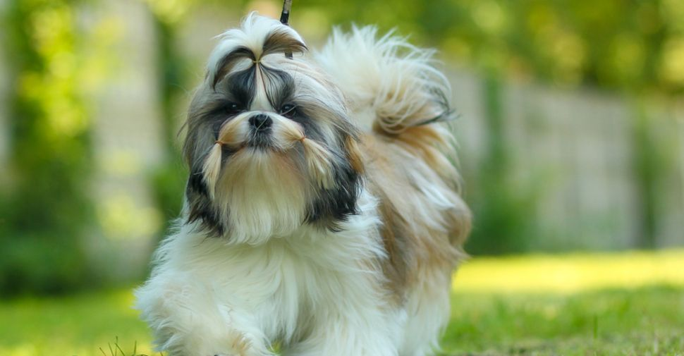 What Are The Best Hypoallergenic Dogs For People With Allergies