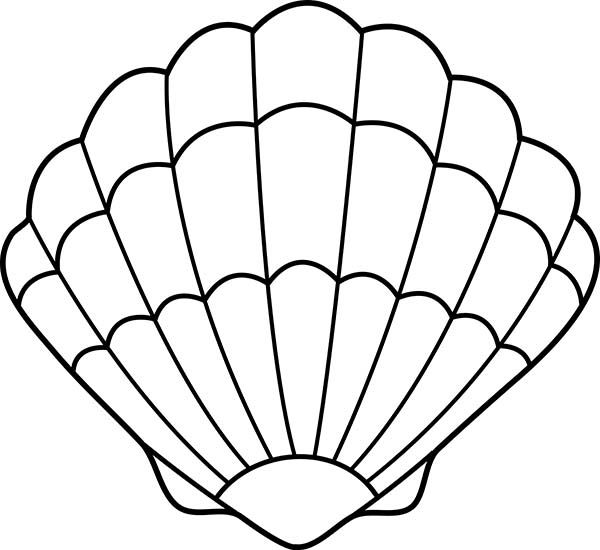 Seashell drawing lovely zigzag scallop seashell drawing for Shells coloring page