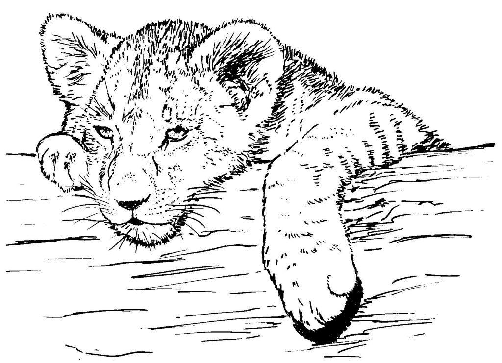 Dessin coloriage animal lionceau par environnement et - Coloriage paysage mer ...