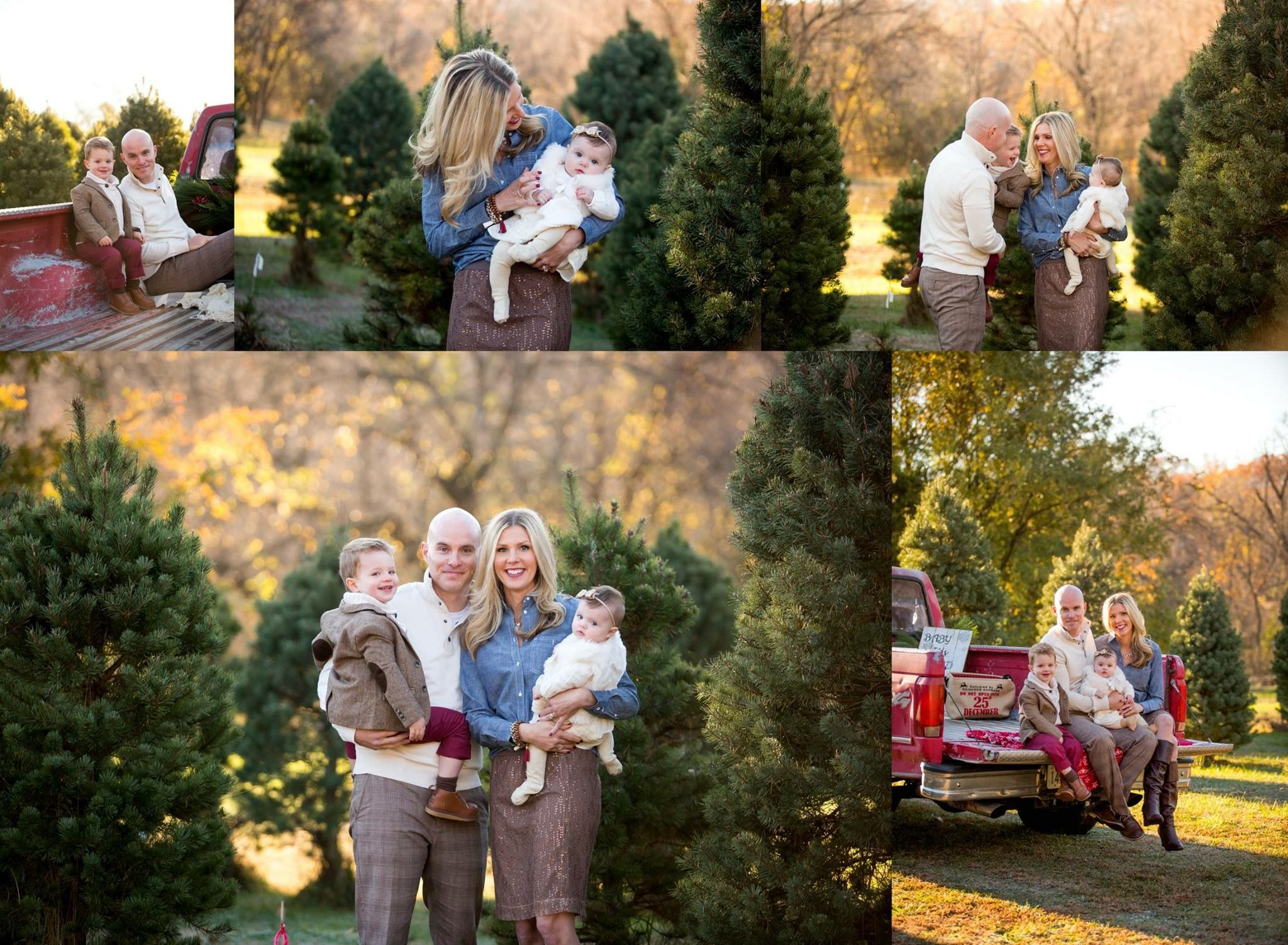 Christmas Tree Farm Minis Were A Huge Success This Year Thank You To All Those Who Came Out I Hope Your Ho Christmas Tree Farm Holiday Photography Tree Farms