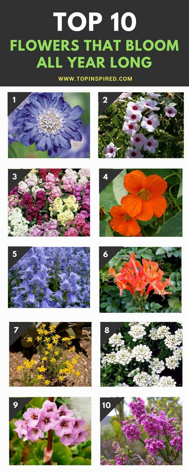 Top 10 Wonderful Flowers That Bloom All Year Long Plants And Gardens