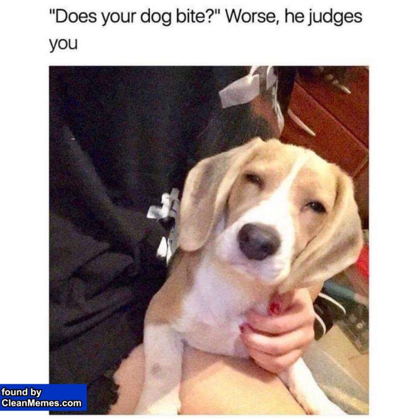 Clean Memes Morning 2020 Puppies Funny Funny Animal Pictures Funny Animals