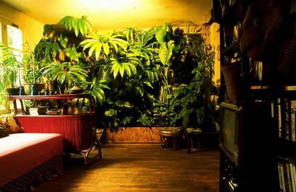 plantevegg