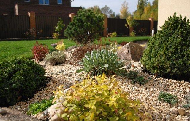 stein vorgarten kies bodendecker zwerggehölze auswahl | garten, Garten ideen