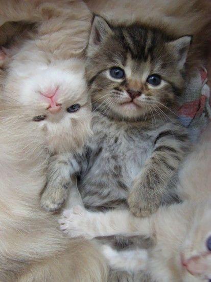 Idee Par Pam Vickie Smith Sur I Love All Animals Chaton Mignon