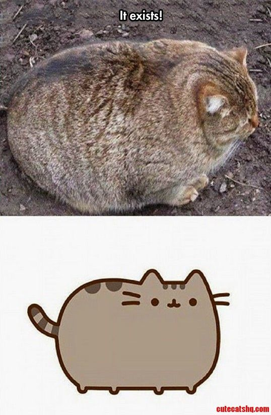 The Real Pusheen - http://cutecatshq.com/cats/the-real-pusheen/ oh mi Dios!!!